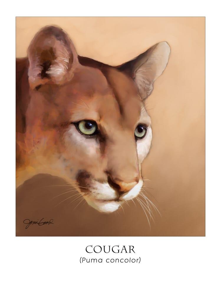 cougar poster | mountain lion | puma